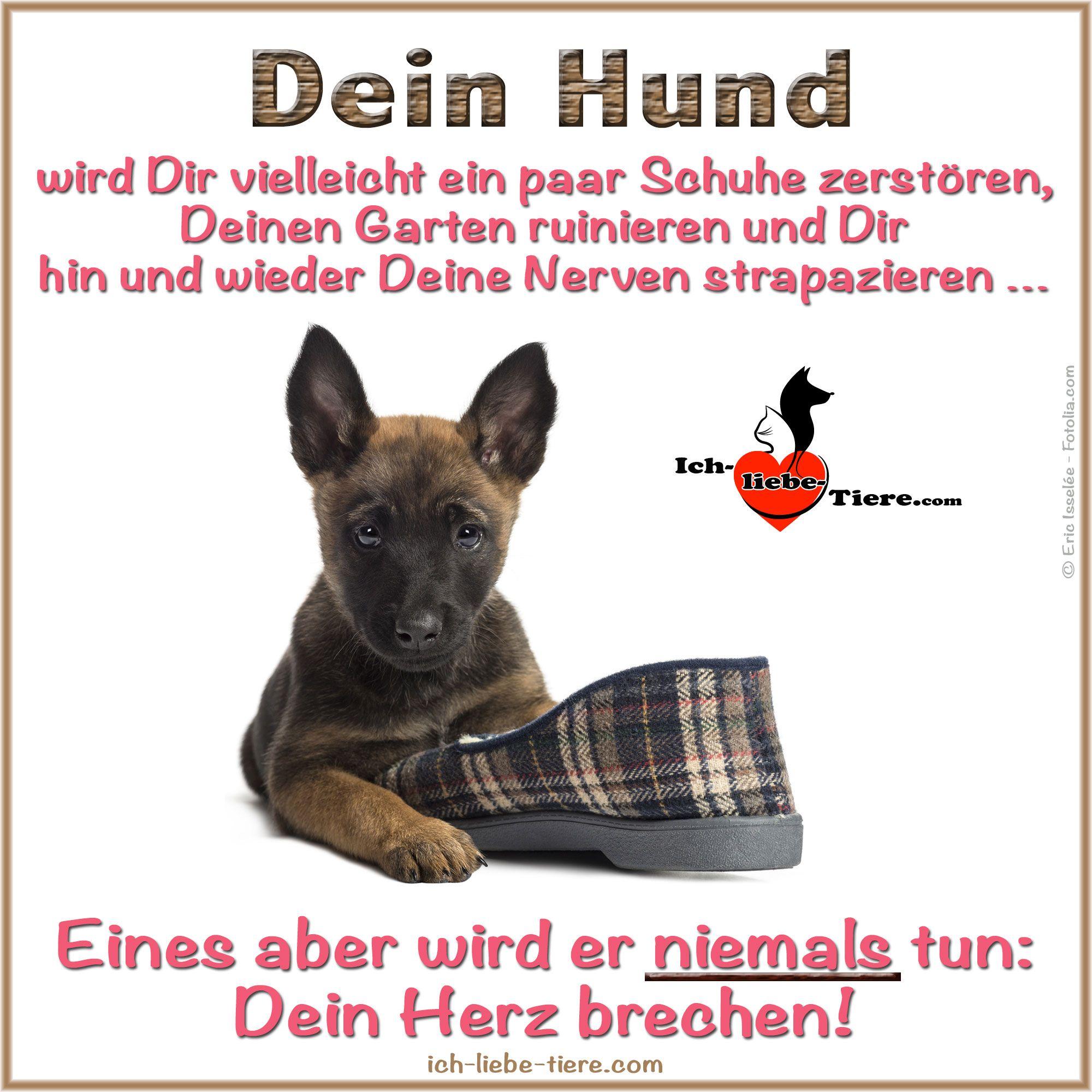 Dein Hund wird Dir vielleicht ein paar Schuhe zerstören, Deinen Garten ruinieren und Dir hin und wieder Deine Nerven strapazieren … Eines aber wird er niemals tun: Dein Herz brechen! >> http://www.ich-liebe-tiere.com/ <<