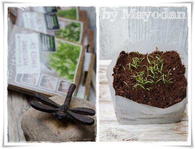 Tulpenzeit und frische Kräuter Pinterest - umgestaltung krautergarten dachterrasse