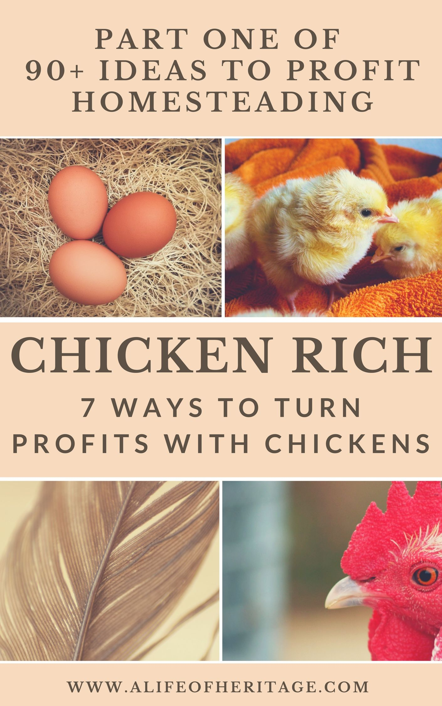 Chicken farming and how to make money with chickens. 7 detailed ideas on how to get started!