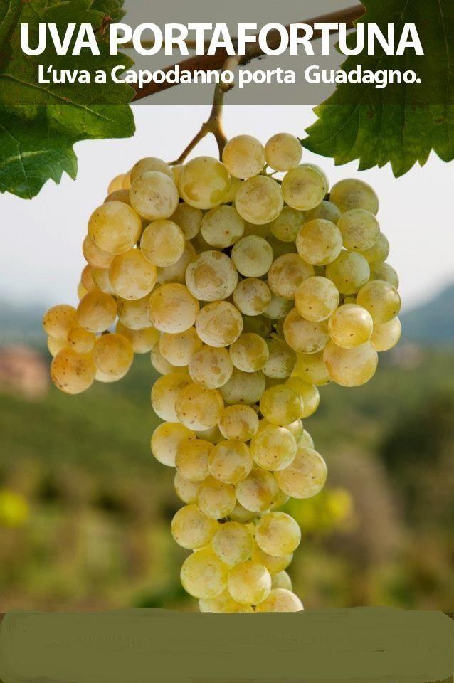 mangia 12 chicchi di uva allo scoccare della mezzanotte, va bene uva bianca ma molto meglio uva rossa..... e BUON ANNO NUOVO