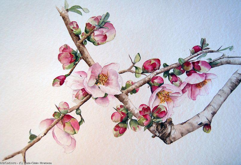 marie claire houmeau fleurs cerisier japonais botanique. Black Bedroom Furniture Sets. Home Design Ideas