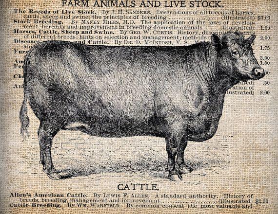 Antique Farm Country Equipment Cow Cattle Illustration Digital Download for Tea Towels, Papercrafts, Transfer, Pillows, etc Burlap No 6193