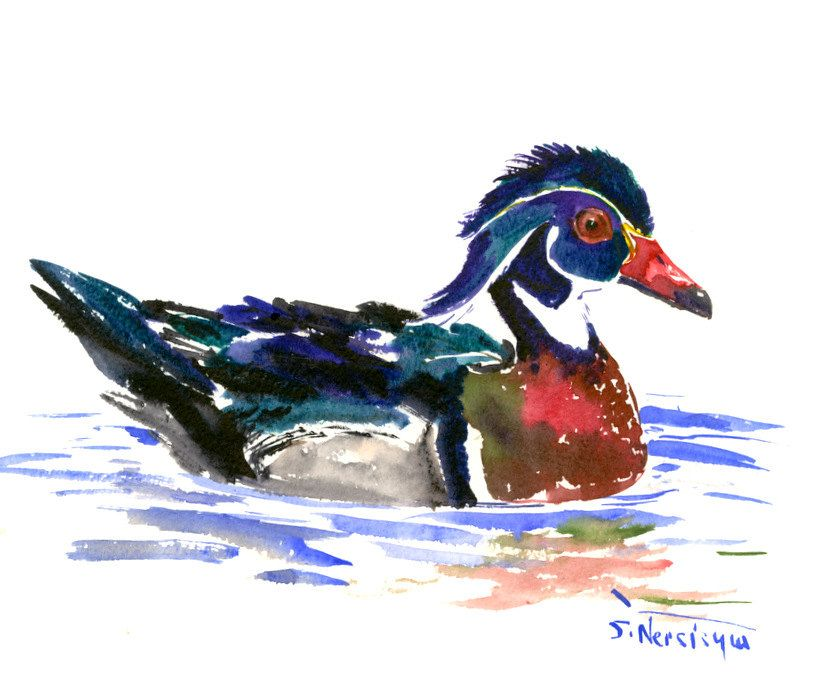 Wood Duck,. Original wagtercolor painting,10 x 8 in, duck art, duck wall art by ORIGINALONLY on Etsy