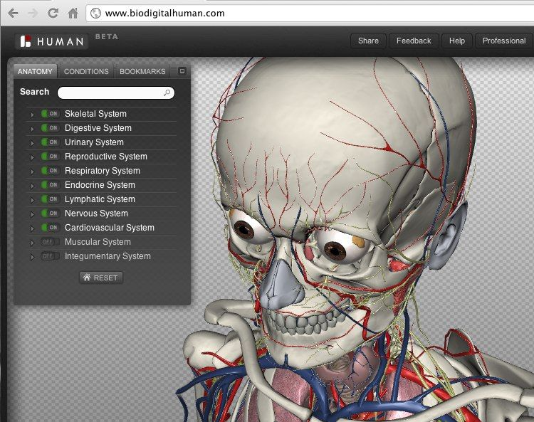 Biodigital Human Exploring The Body In 3d Simulation That Is