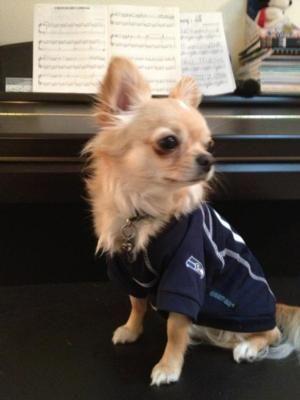 Seattle Seahawks Dog Jersey Dogs Cute Animals Pet Dogs
