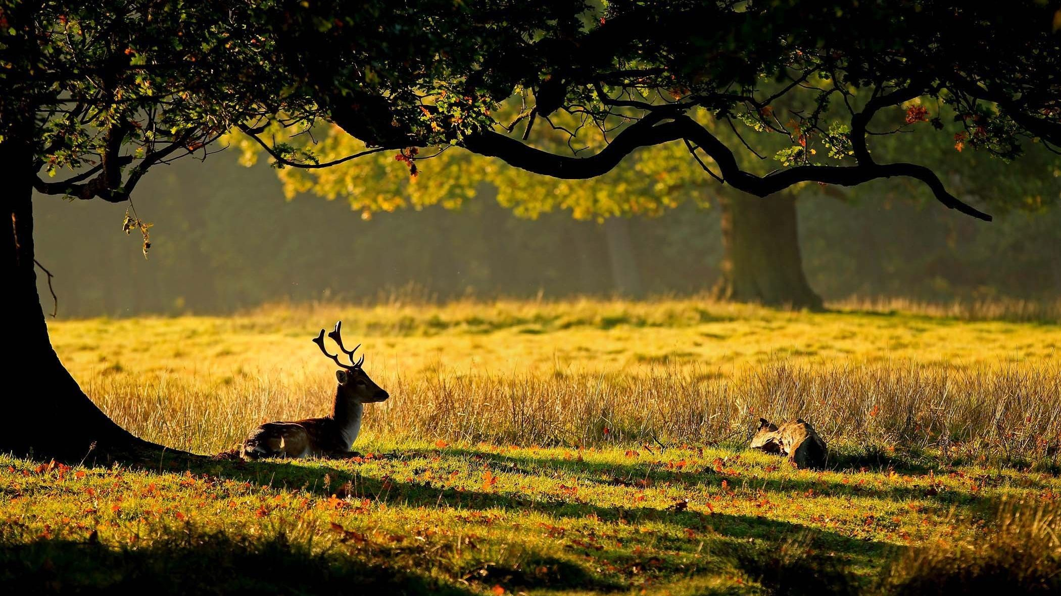 Good Morning Goodmorning Good Morning Sunrise Wow Newday Health Happiness Friends People Everyone Worl Deer Wallpaper Autumn Animals Wild Nature