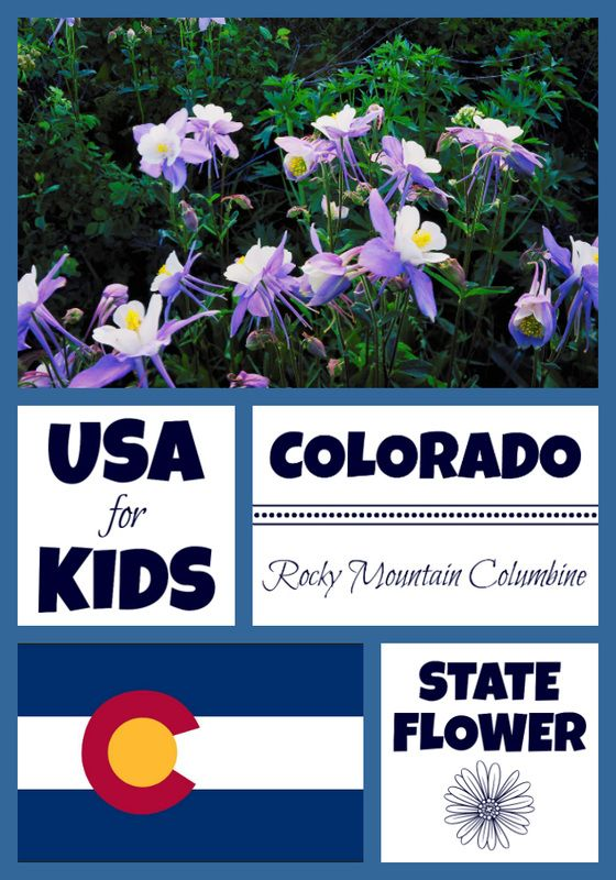 Colorado State Flower Usa State Flowers Colorado Facts