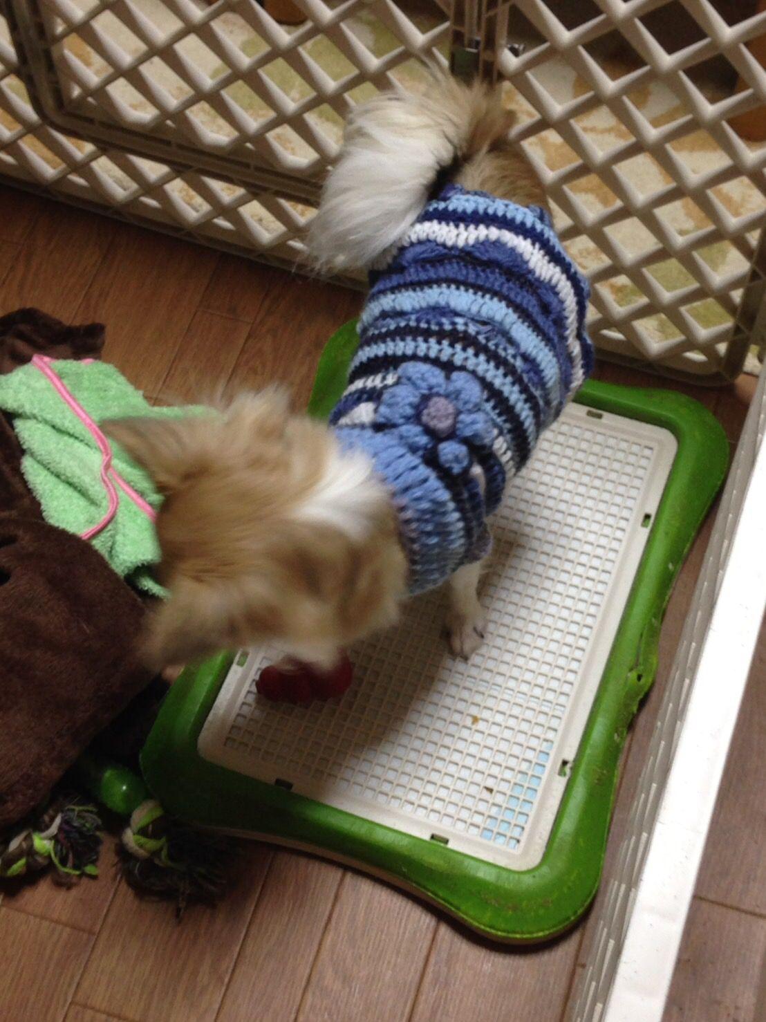 寒い冬にはあたたかいワンちゃんの毛糸の服を。