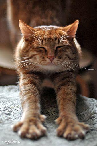 Anna Myzblka Romashova Photography Katzen Tiere Seltsame Katzen