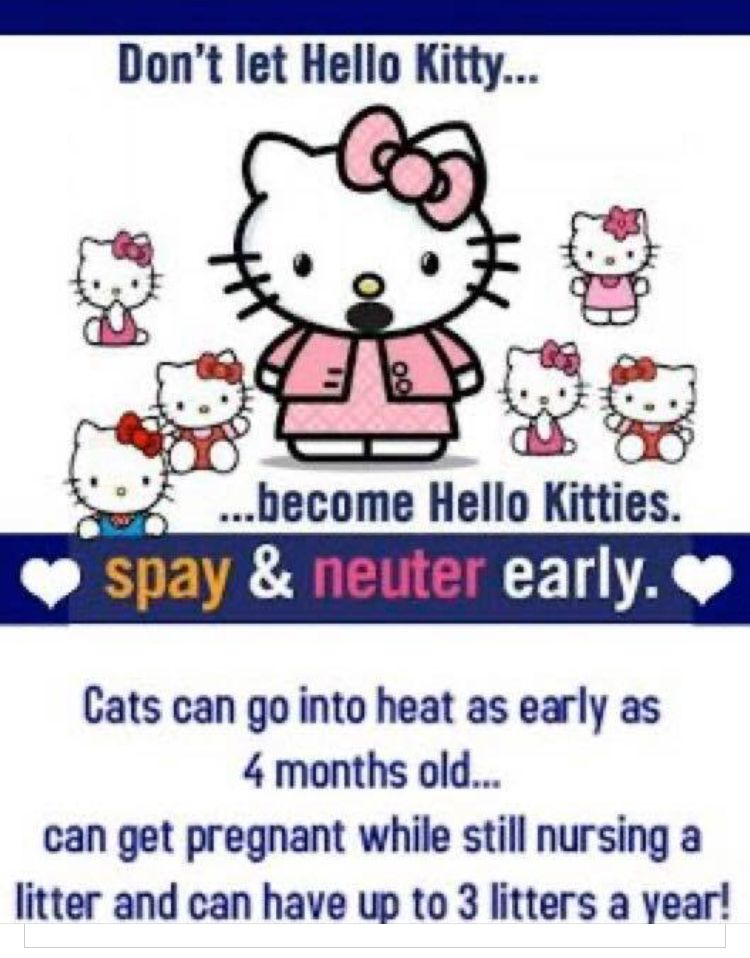 Pin by Julee JohnsonTate on Hello Kitty in 2020 Neuter