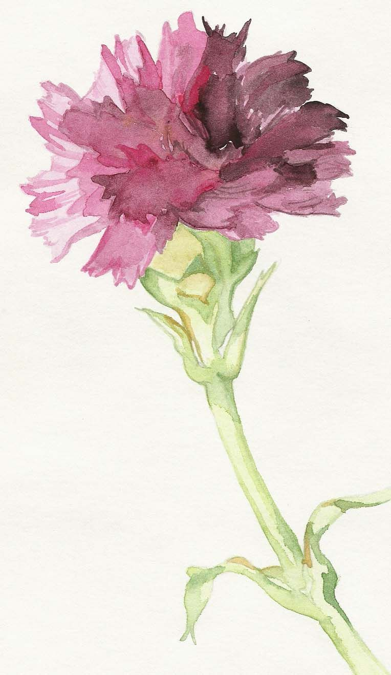 Browsing Still Life On Deviantart Watercolor Flowers Floral Watercolor Flower Painting