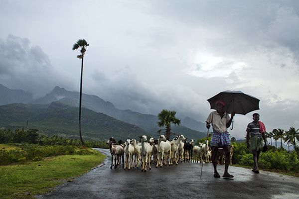 The Beauty of India - Incredible Photos (With images) | India ...