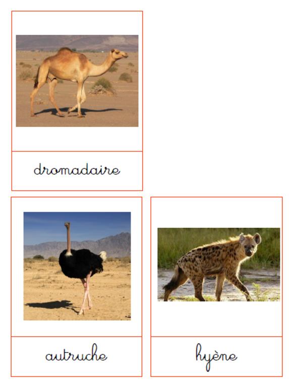 L Afrique Imagier Animaux Animaux Afrique Animaux