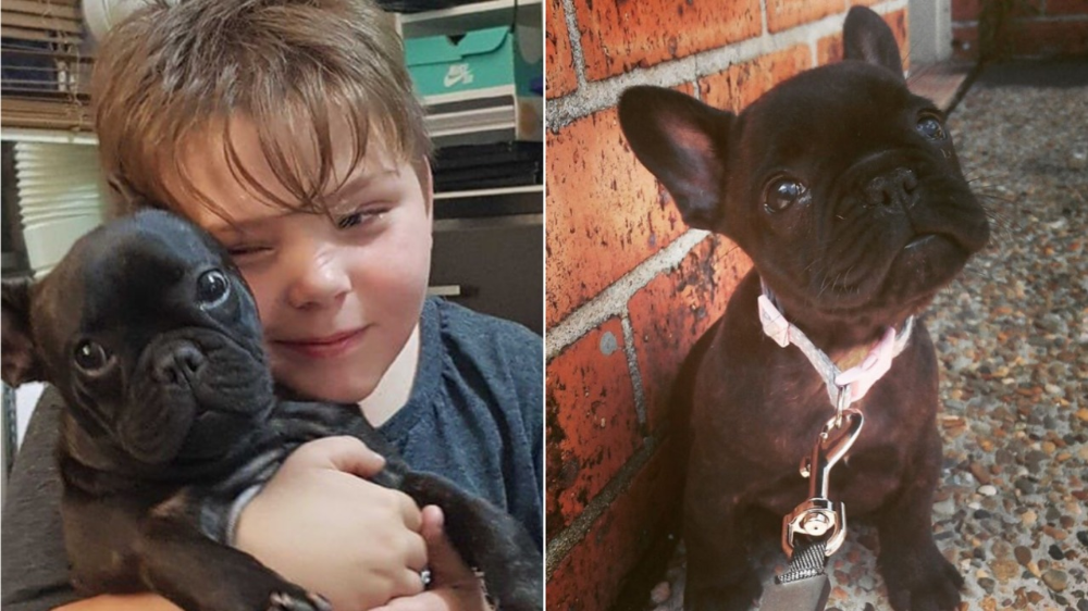 Heartless Thieves Steal Therapy Dog From Autistic Sydney Eight Year Old In 2020 Therapy Dogs Dogs Furry Friend