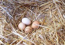 Uovo (alimento) - Wikipedia