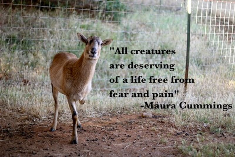 10 Inspiring Quotes About Animals Animal Lover Quotes Animal