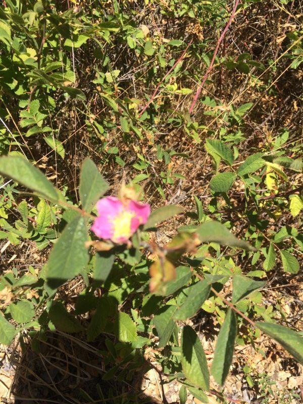 Free Plant Identification Planting flowers, Organic
