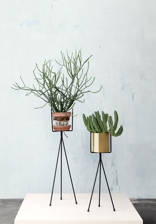 house plants Plantes Pinterest Pots, Plantes et Vegetal