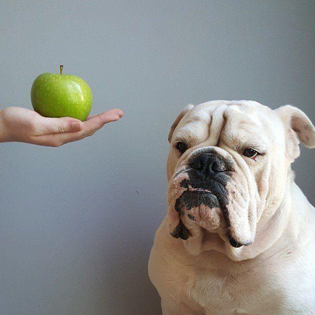 golosinas naturales para perros