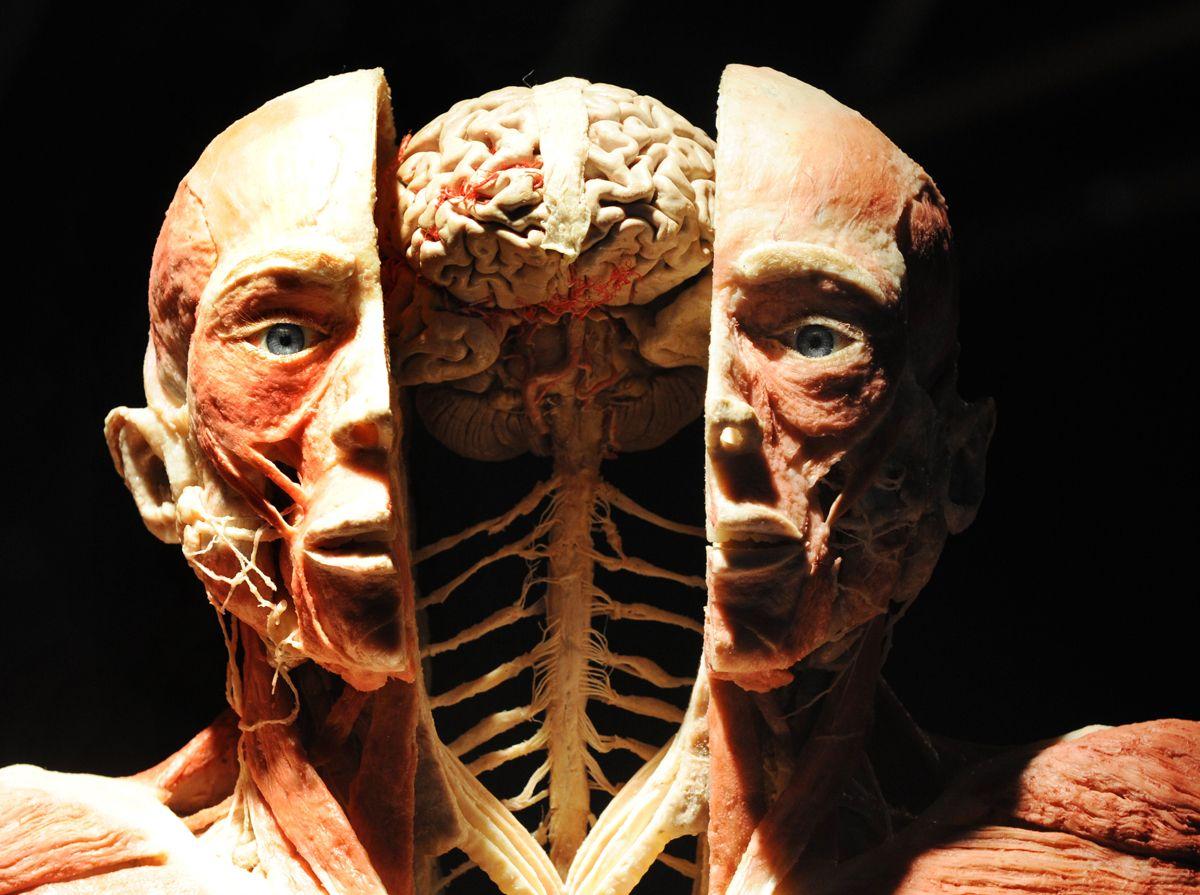 la maravilla que es el cuerpo humano   Anatomia   Pinterest   El ...