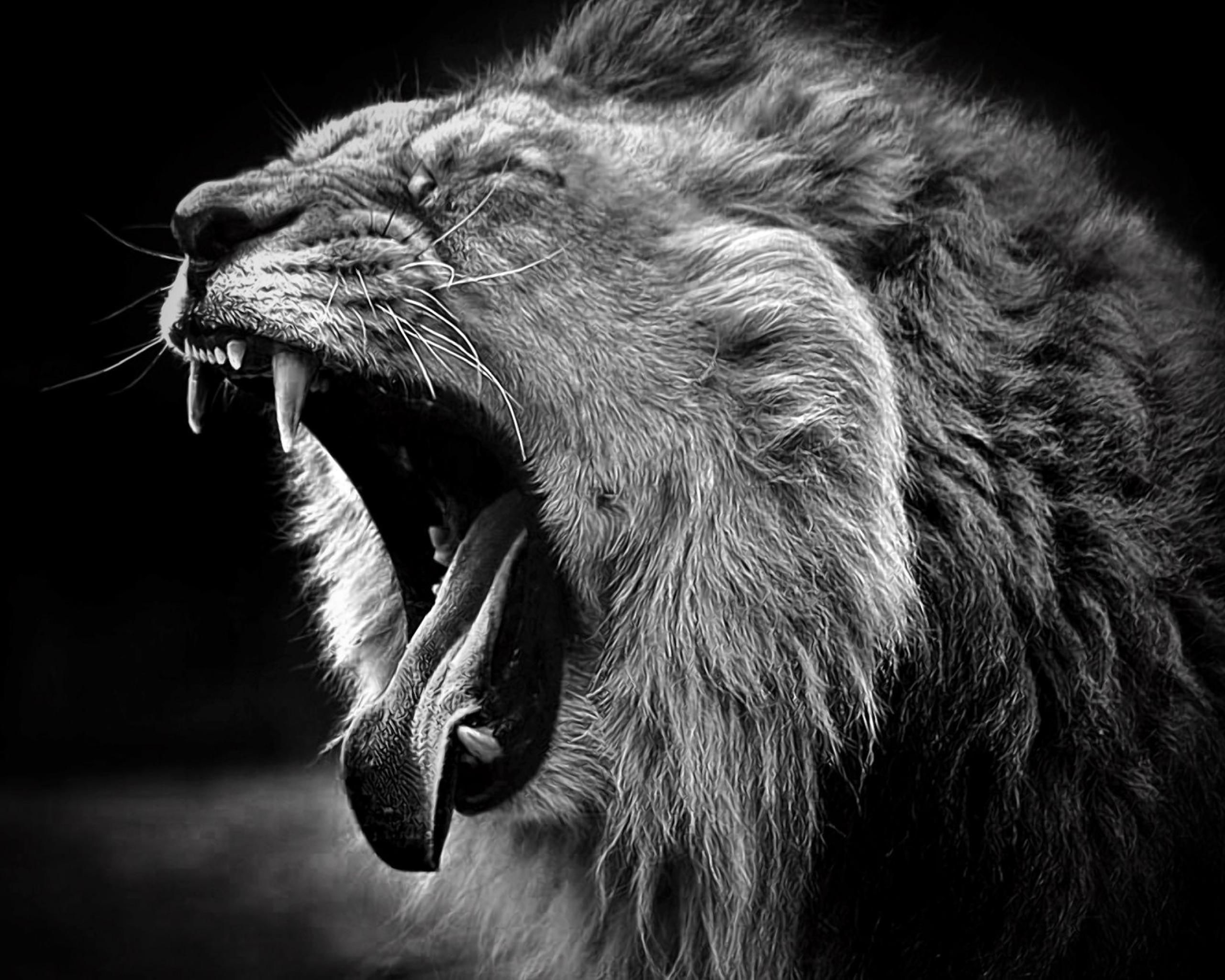 black and white animal photo Wallpapers Lion Animals