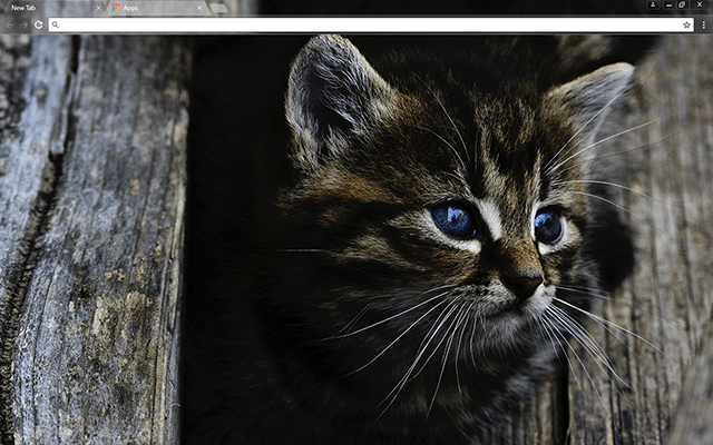 Dark Kitten Google Chrome Theme Pets Cats Cats Kittens Cutest
