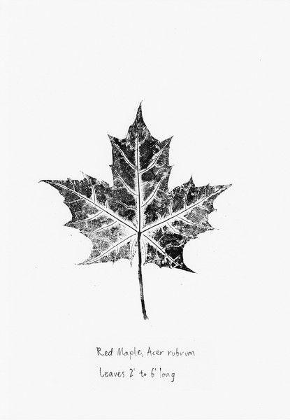 Originaldruck - red maple leaf - Originaldruck - ein Designerstück ...