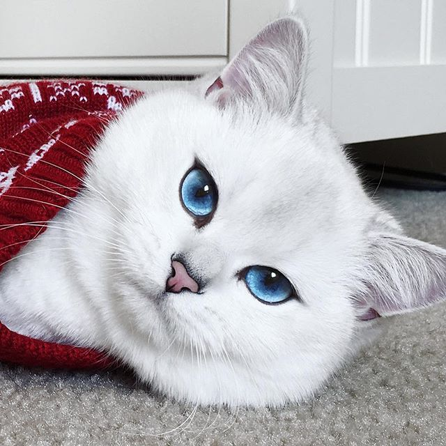 Photo Of A Fuffy White Cat