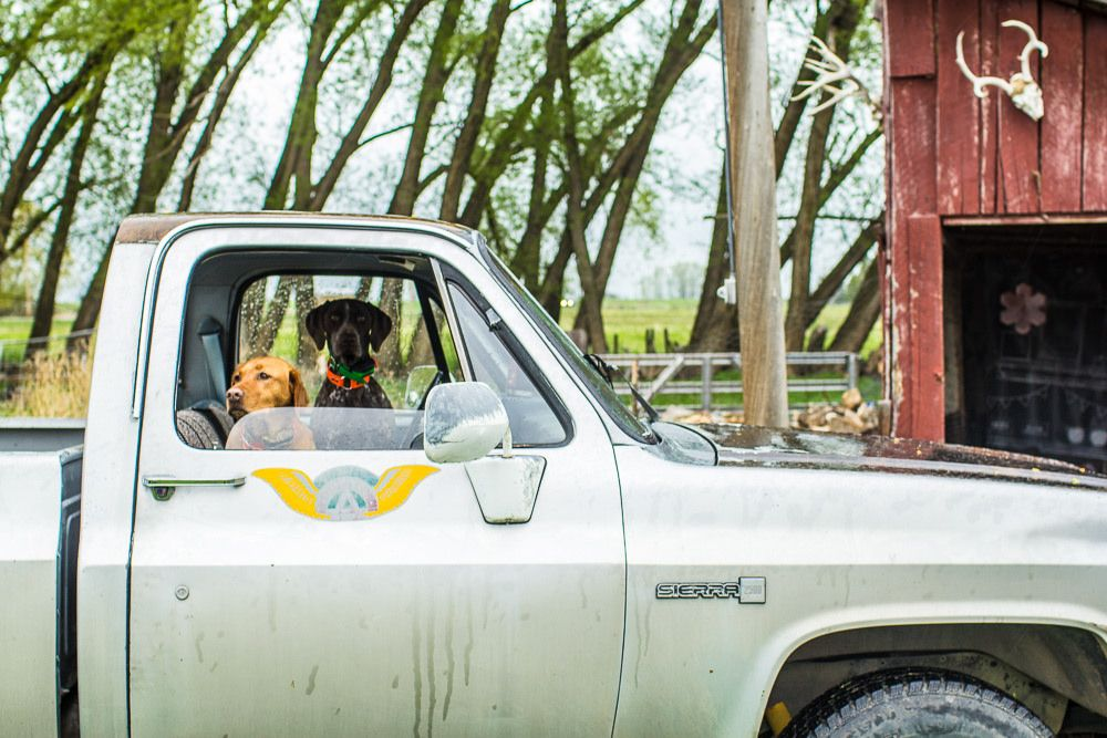 dog. truck. ranch