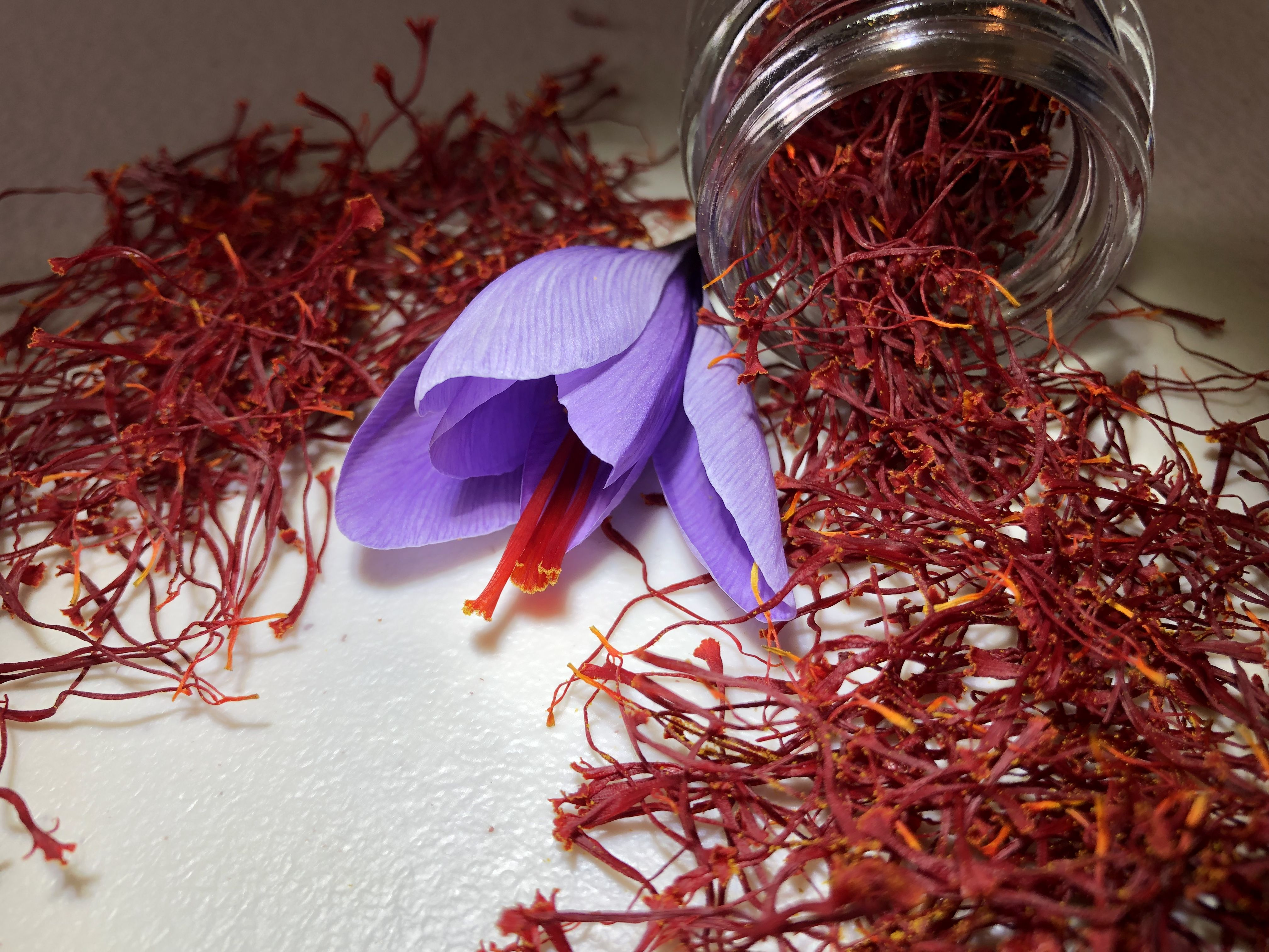 Our saffron corms have the potential to grow PREMIUM GRADE