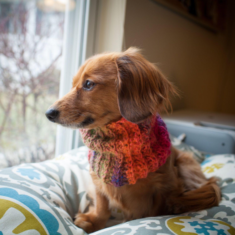 Puppy Scarf Dog scarf, cowl, dachshund scarf, cowl, small