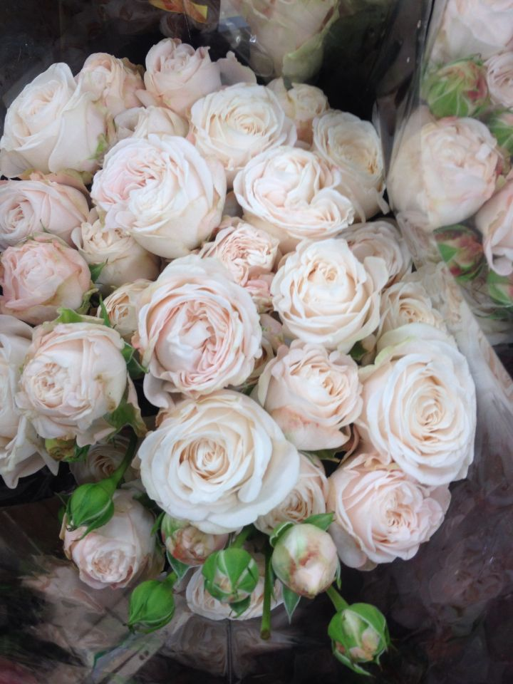 Bombastic spray roses floral pinterest sprays rose for Flower sprays for weddings