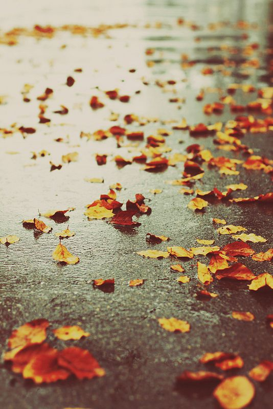 Beautiful Life Is So Full Of Unpredictable Beauty And Strange Surprises. Sometimes  That Beauty Is. Autumn RainAutumn ...