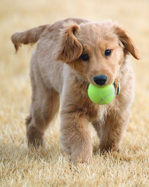 'Play Fetch Daddy's - Cute Little Baby Puppy