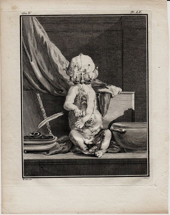 1766 Antique BIZARRE ANIMAL FETUS by TwoCatsAntiquePrints on Etsy, $90.00