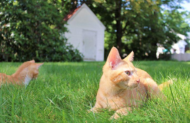 Inspired By Kittens Kittens Feline Sweet Stories