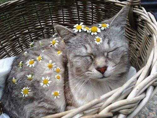 cat ❤ ��