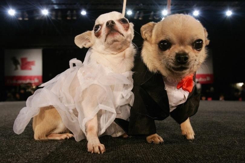 Newly Married Couple Wedding Pets Dog Wedding Animals