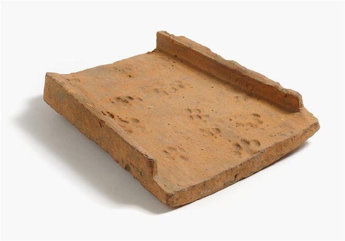 Roman Tegula Colchester Archaeology Cat Paw Print