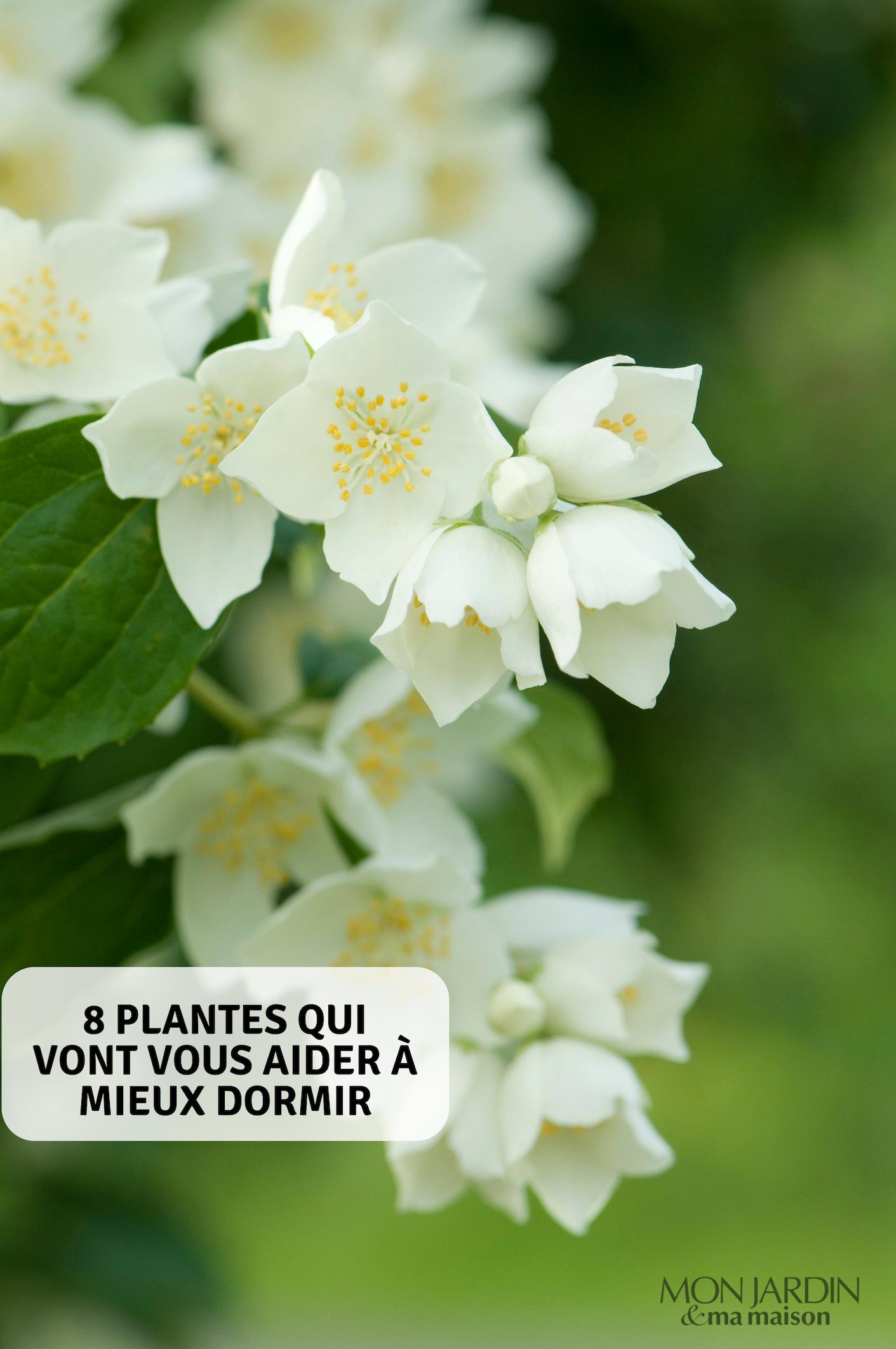 8 plantes qui vont vous aider à mieux dormir | Plante ...