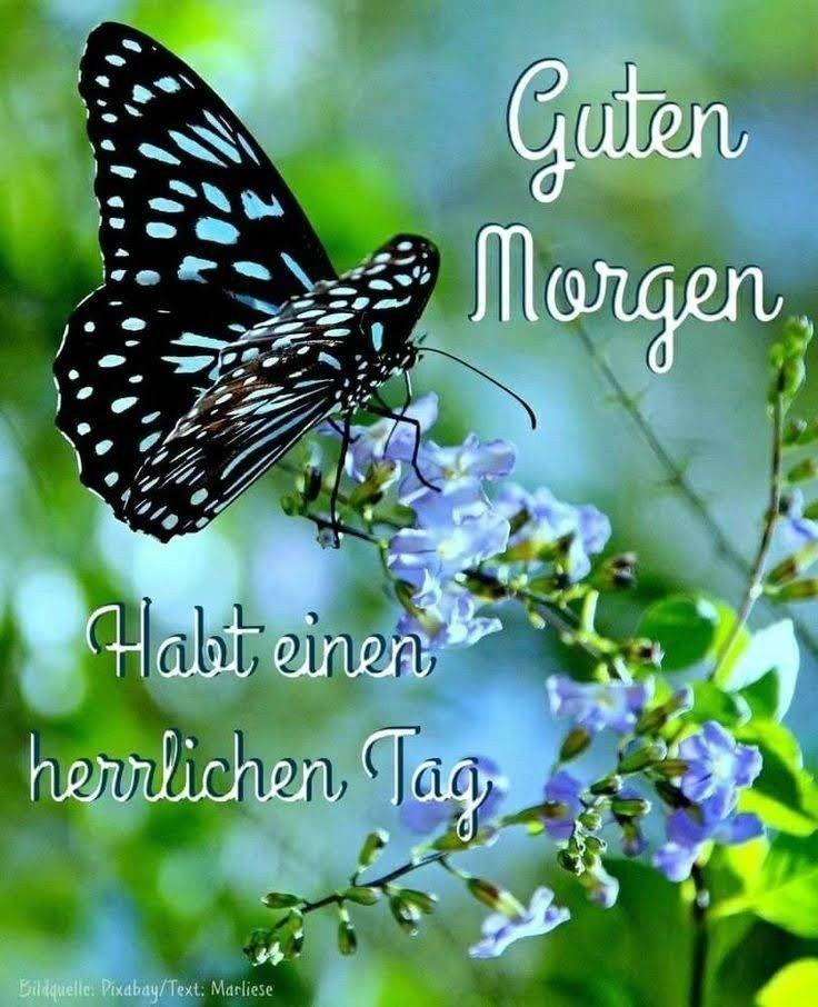 Photo of ✌ www.blog.schreibd… – Herzlichen Glückwunsch – # Herzlichen Glückwunsch #wwwblogschreibd