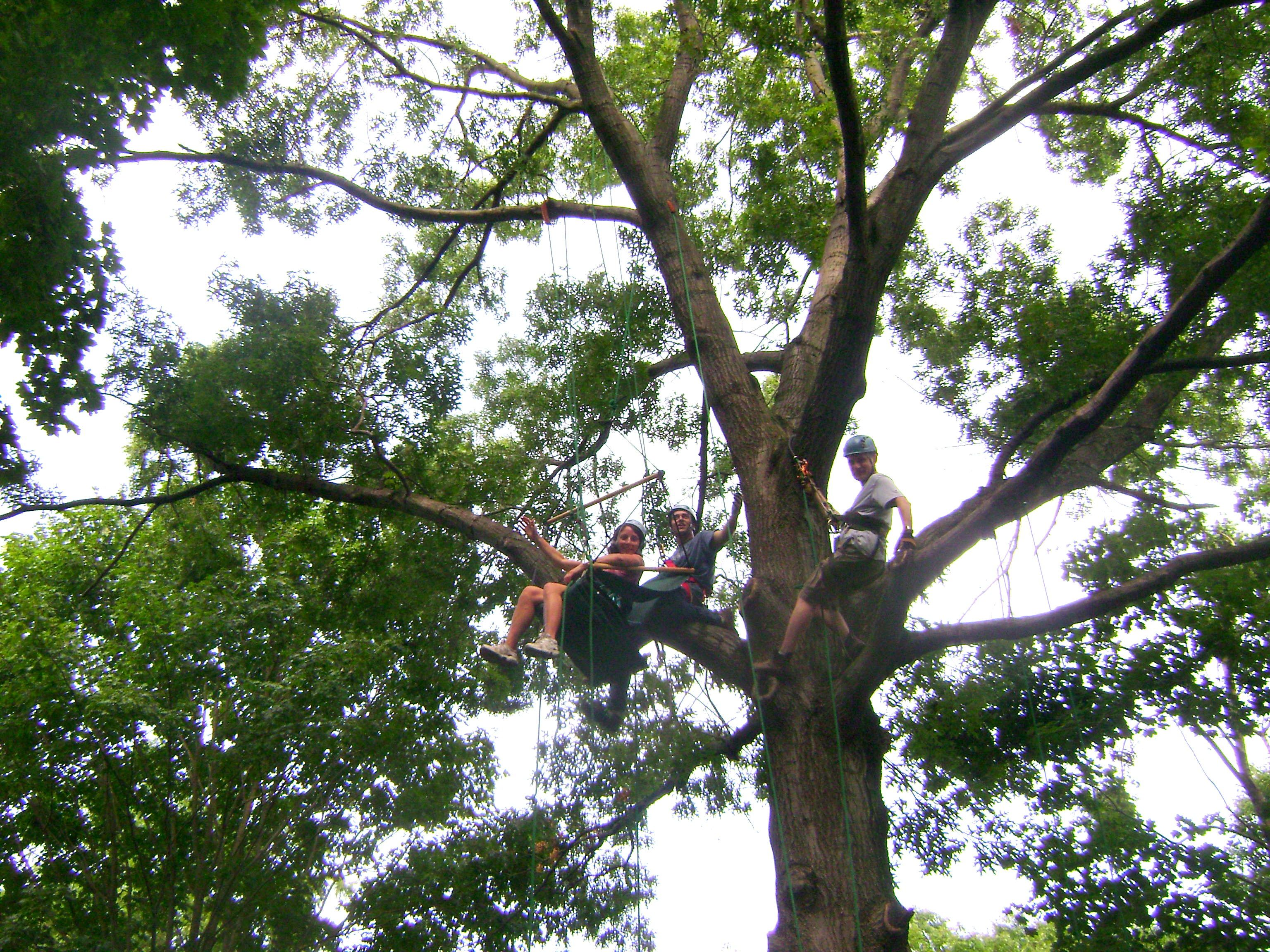 how to climb a tree with just a rope