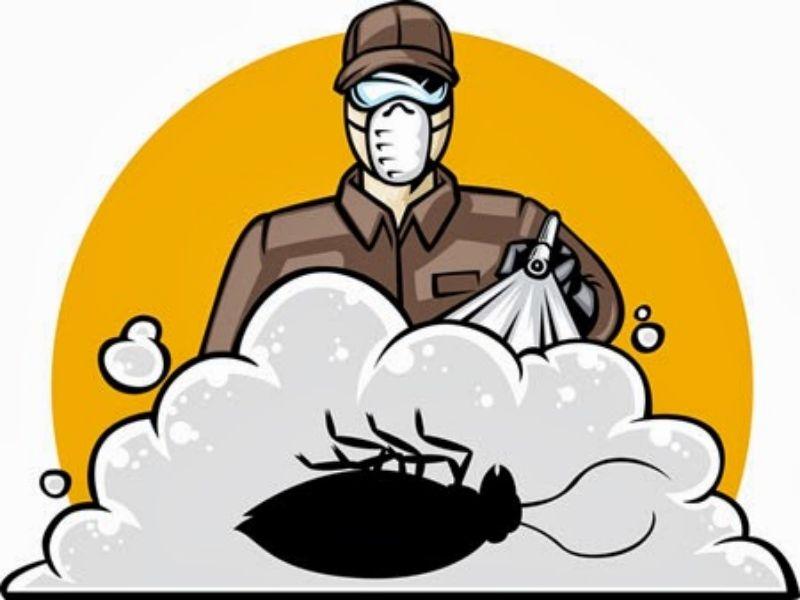 طرق مكافحة الصراصير الصغيرة Pest Control Pest Control Services Best Pest Control