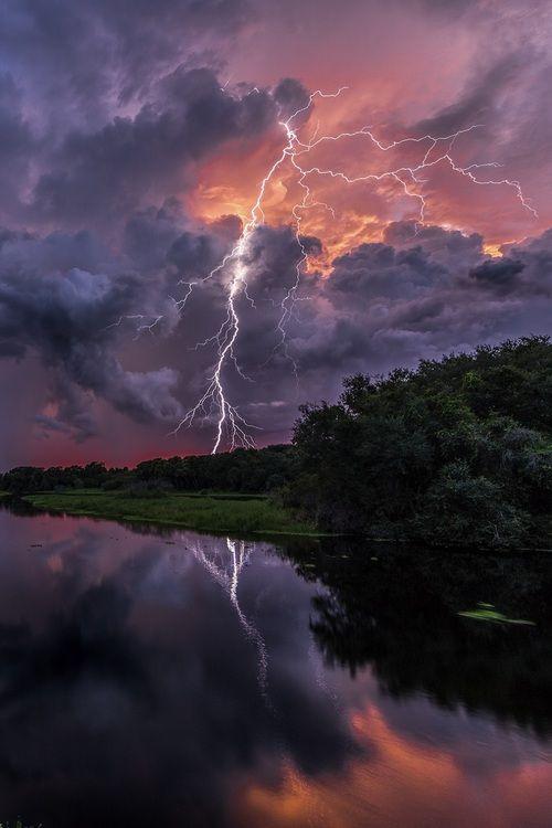Nature's Whip! - Myakka, Florida