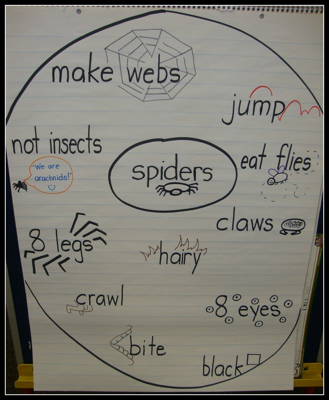 Today In First Grade Spiders
