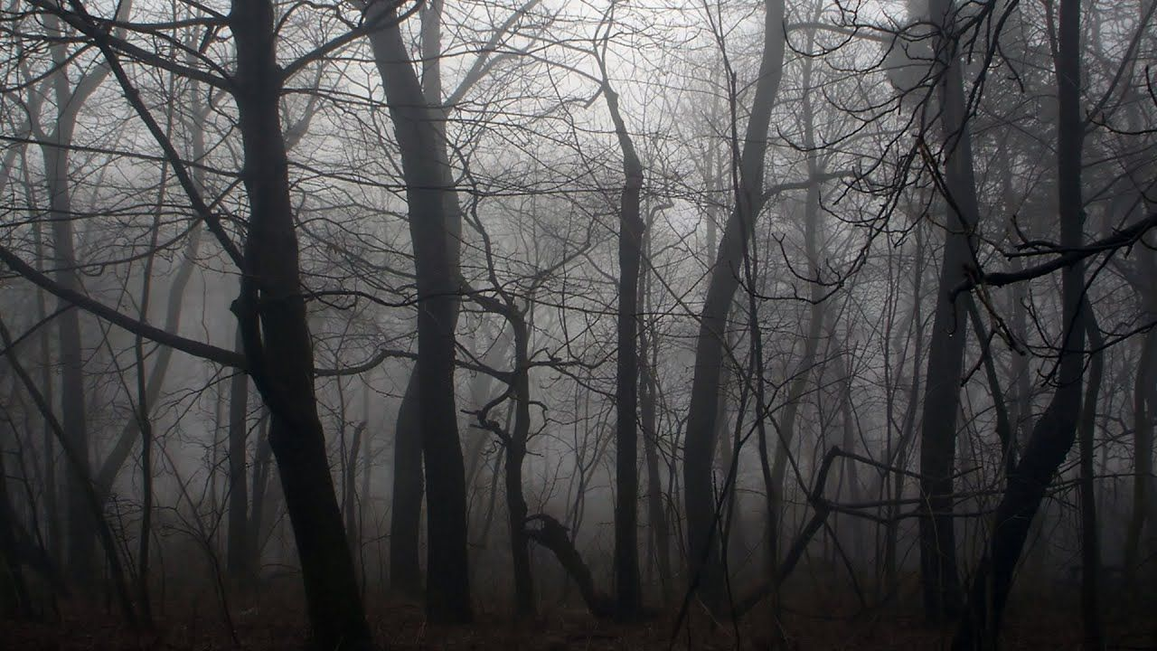 Download Dark Forest Wallpaper 2560x1600 For 4k Monitor