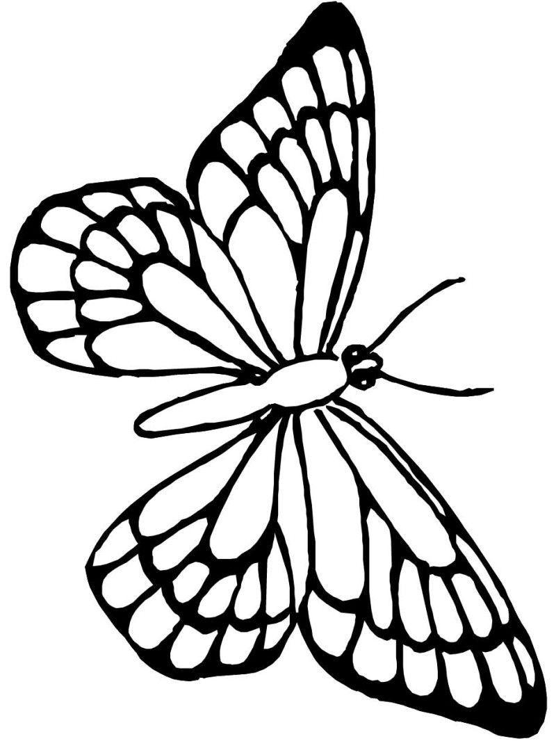 Pin En Butterfly Coloring Page [ 1066 x 800 Pixel ]