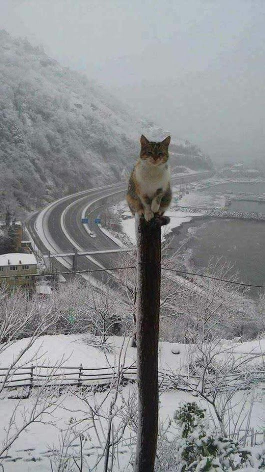 Image result for cats sitting up high on post