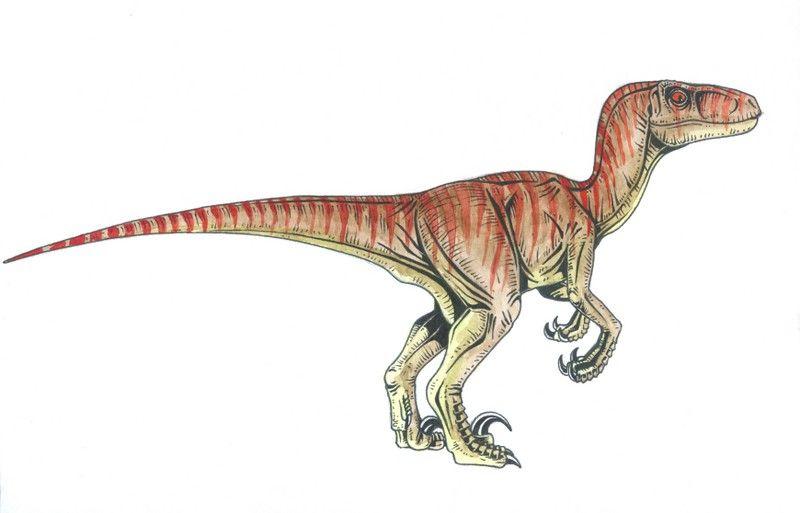 velociraptor - Buscar con Google | dinosaurios | Pinterest | Buscar ...