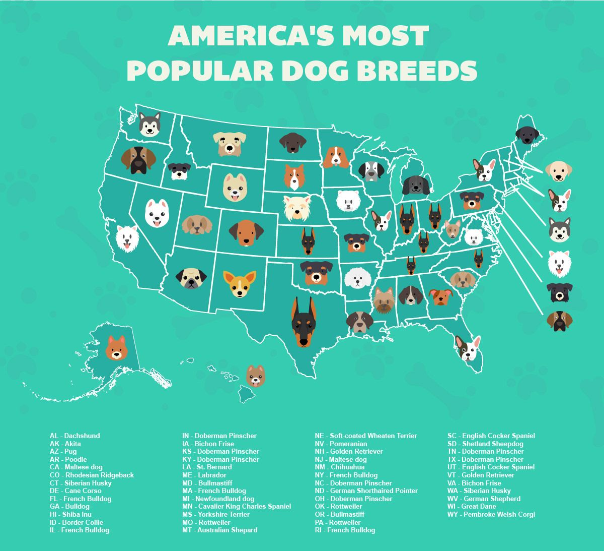 A Map Of Every State S Most Popular Dog Breed Popular Dog Breeds